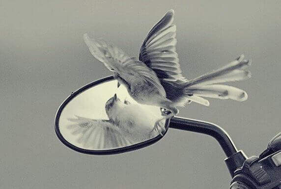 As armadilhas do ego que impedem o nosso crescimento pessoal