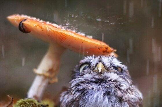 Chuva caindo na natureza