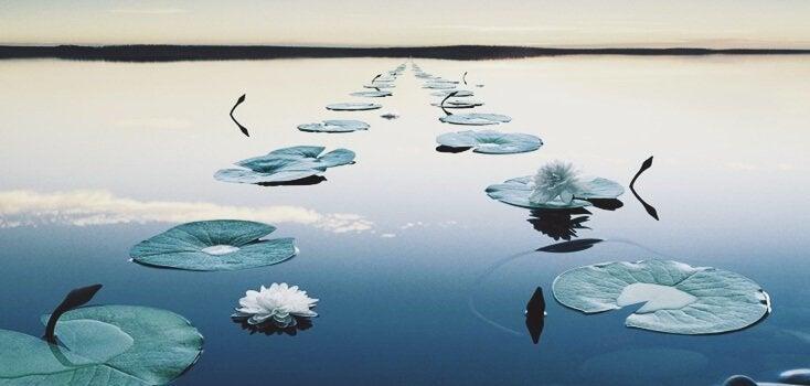 Plantas simétricas em lago