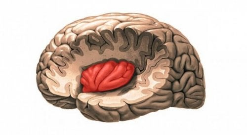 Funções dos lobos cerebrais