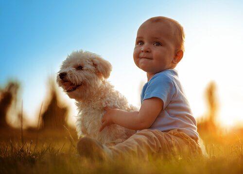 A compaixão das crianças
