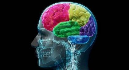 O cérebro viciado: anatomia da compulsão e da necessidade