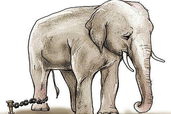 O elefante acorrentado