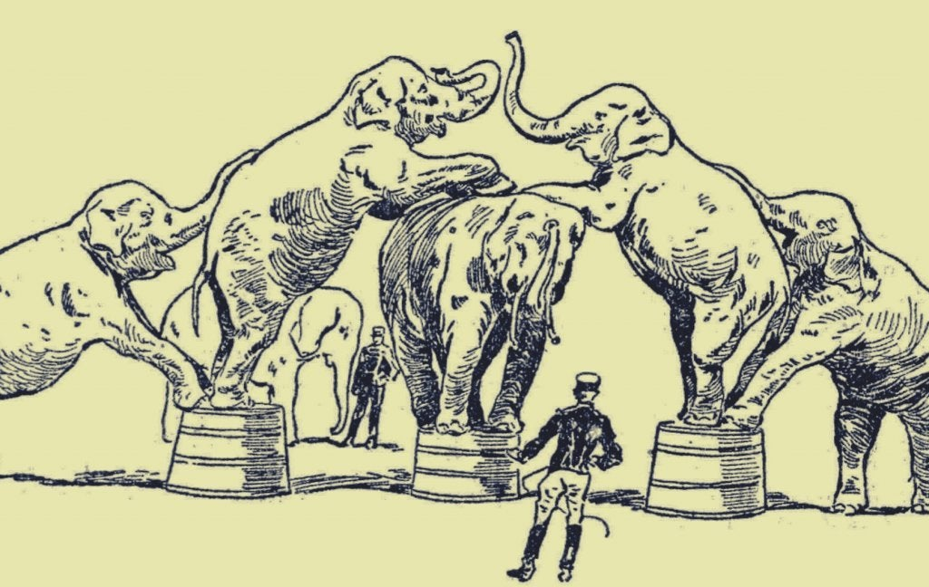 As tristezas por trás da vida dos animais no circo