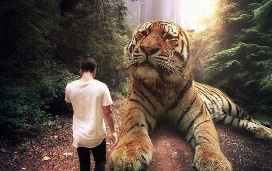 Homem com tigre gigante na floresta