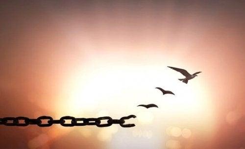 Pássaro que consegue se libertar