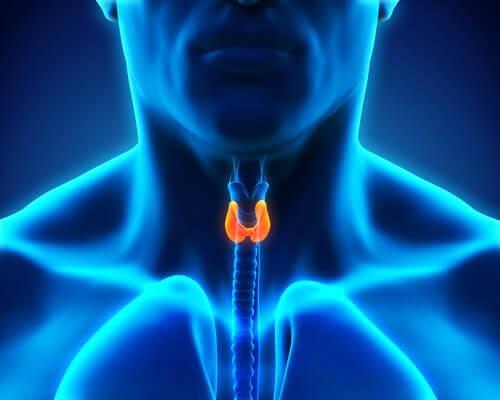 A saúde da tireoide