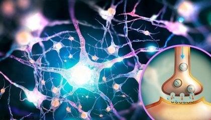 Glutamato, um neurotransmissor com múltiplas (e desconhecidas) funções