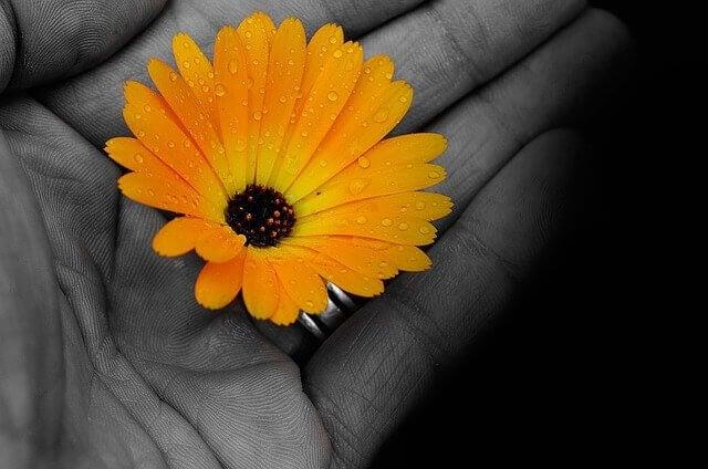 Flor colorida na palma de uma mão