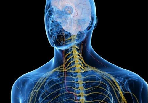 O que você sabe sobre o nervo vago?