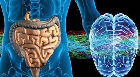 Sistema nervoso entérico: não pensa, mas sente