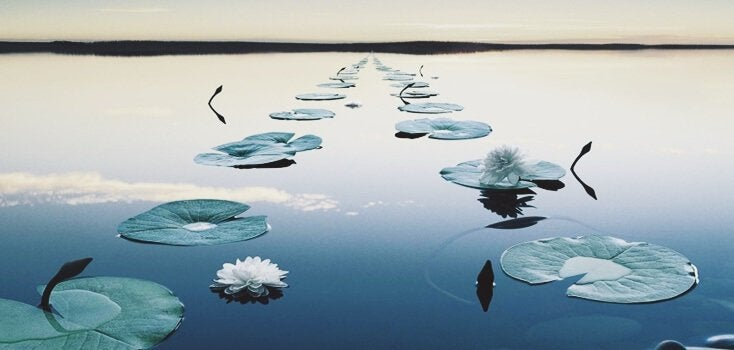 Folhas em lago parado