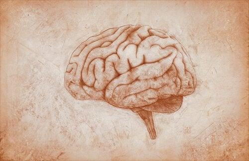 A resiliência e o cérebro