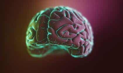 Neocórtex: estruturas e funções