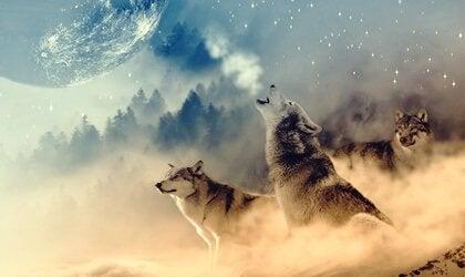 O que é a Medicina do Lobo, segundo os índios americanos