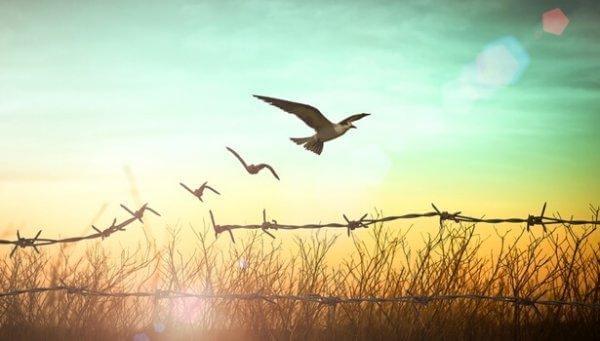 Pássaros se libertando