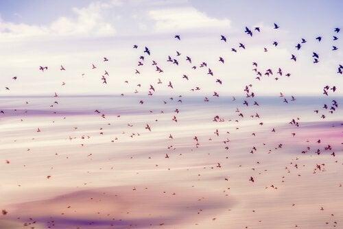 Grupo de pássaros voando