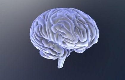 Cérebro da criança com transtorno do espectro autista