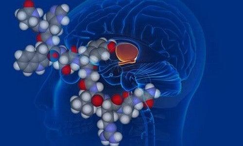 Vasopressina, o hormônio antidiurético