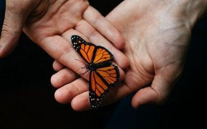 Mãos segurando borboleta