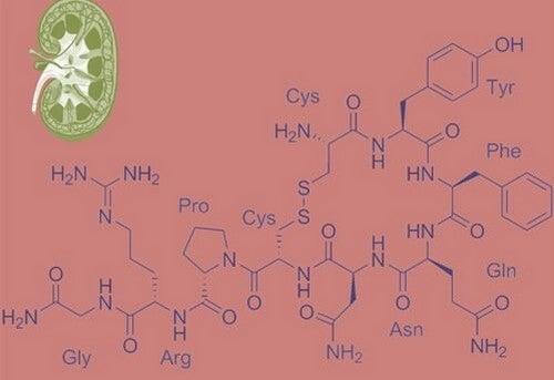 O que é a vasopressina?