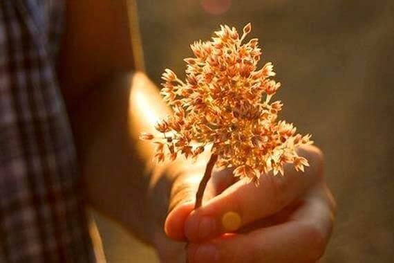 Mão com planta pequena