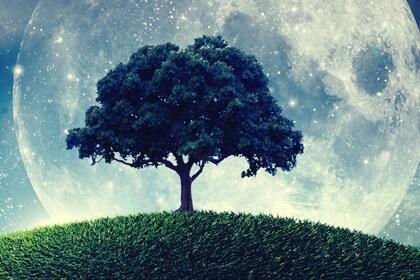 A parábola da árvore que não sabia quem era