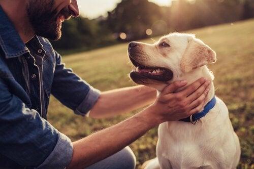 Histórias de cães que deixaram sua marca