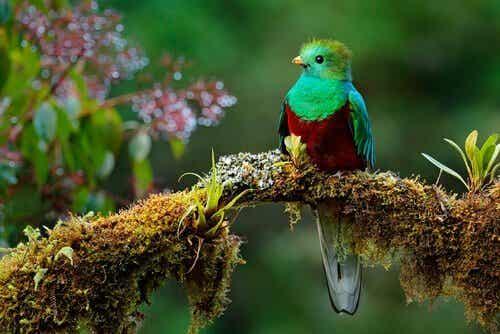 A bela lenda do pássaro Toh