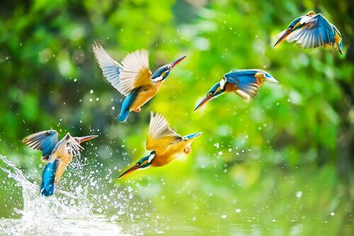 Pássaros voando sobre a água