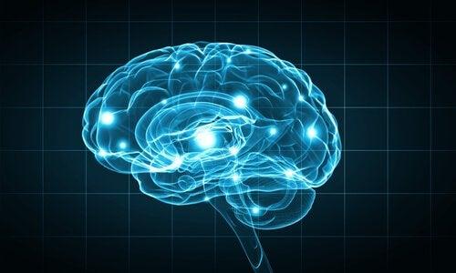Cérebro iluminado por luz azul