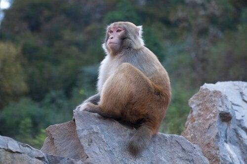 Macaco em cima de pedra
