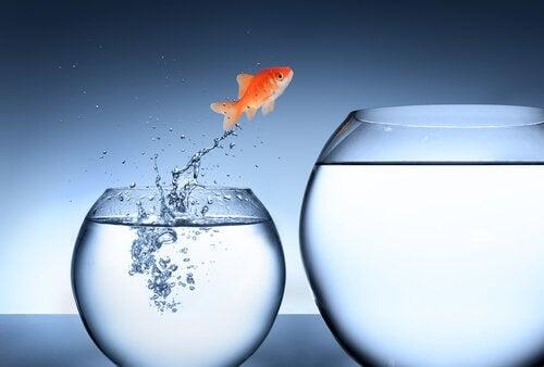 Peixe saltando para outro aquário