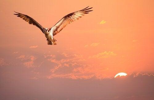A ave que não sabia quem era, uma história sobre a identidade