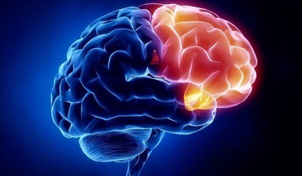 A região cerebral da culpa