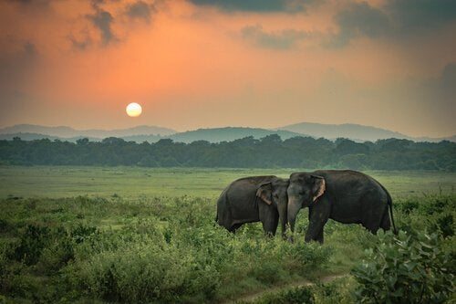 A tristeza dos elefantes, uma história real
