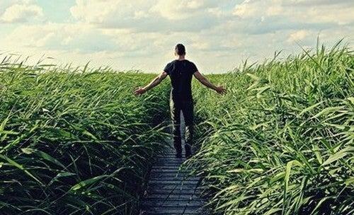 Homem caminhando entre plantações