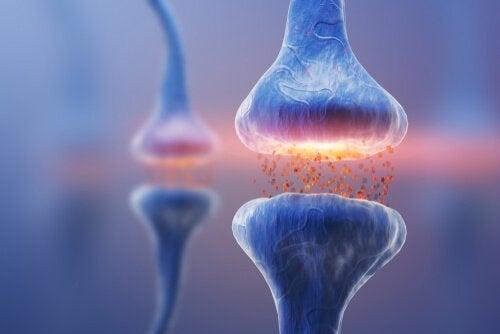 Tipos de sinapses: a comunicação neuronal