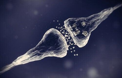 Tipos de sinapses