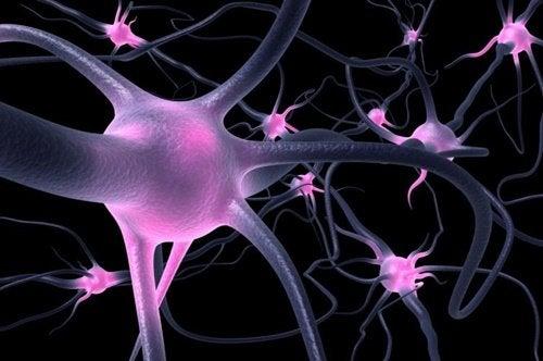 O que são as células OLM?