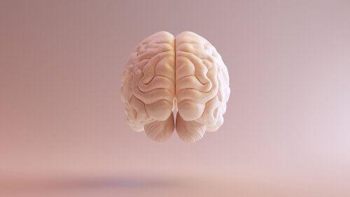 O cérebro e a história da neurociência