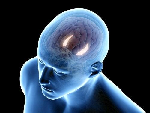 Formação hipocampal