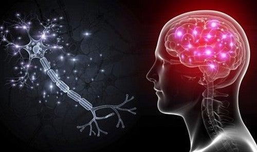 Células OLM: os neurônios que nos ajudarão a tratar a ansiedade severa