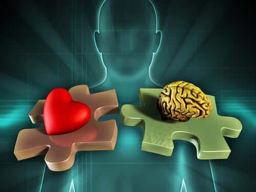 A neuroanatomia das emoções