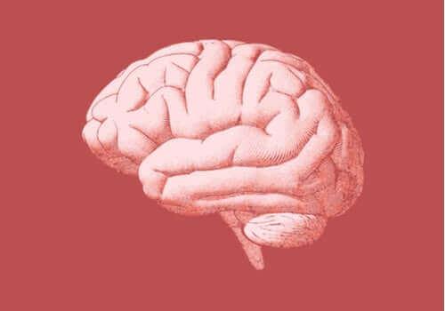 Efeitos do vício no cérebro