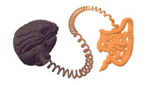 A conexão entre intestino e cérebro