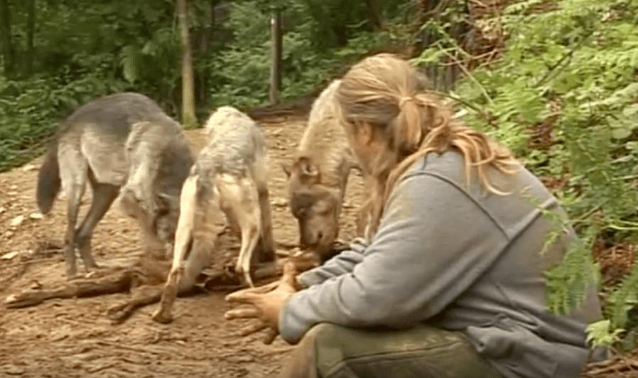 Shaun Ellis e os lobos