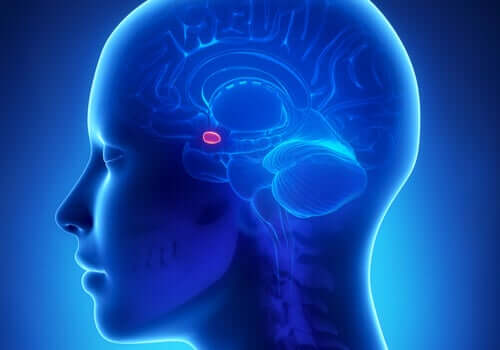 Amígdala cerebral em destaque