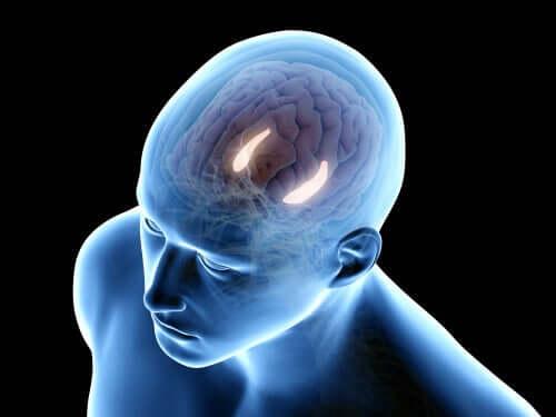 Figura de homem com estruturas cerebrais iluminadas