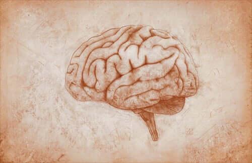 Estudos de John Hughlings Jackson sobre o cérebro